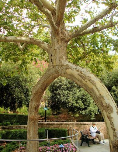 AXEL ERLANDSON'S CIRCUS TREE