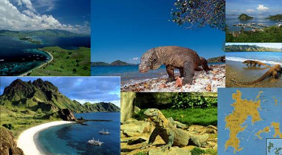 Komodo dipercaya sebagai sisa binatang purba Dinosaurus yang masih hidup