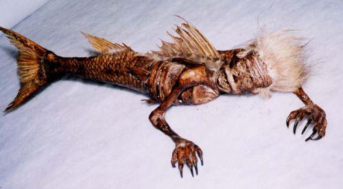 Mummi ikan duyung
