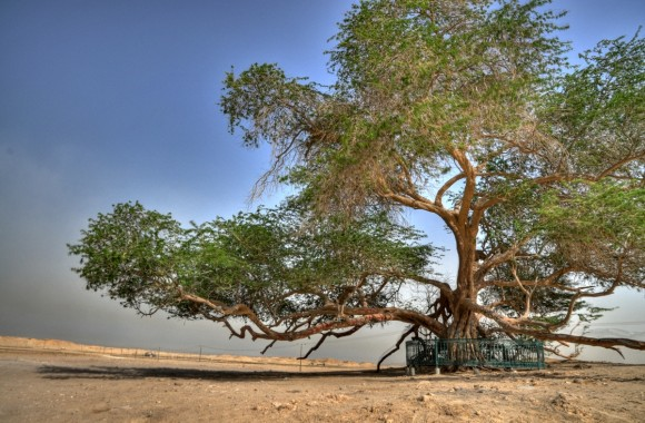 TREE OF LIFE, BAHRAIN