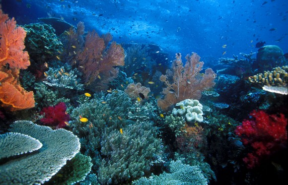 spesies biota laut