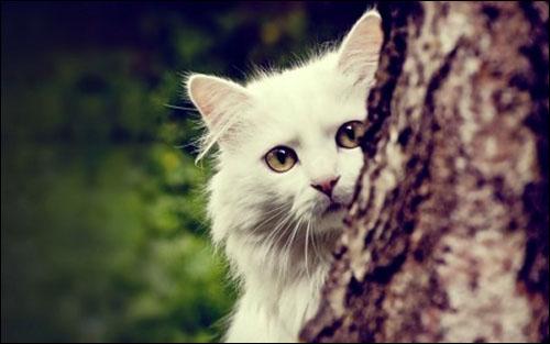 Detil dan ragam yang mengagumkan di ciptakan Allah bagi kucing