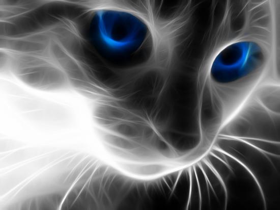 Keistimewaan Penglihatan Mata Kucing