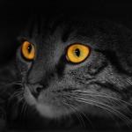 Struktur mata kucing berbeda dengan manusia