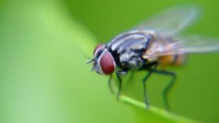 Keistimewaan Perangkat Penerbangan Lalat dan Serangga Kecil