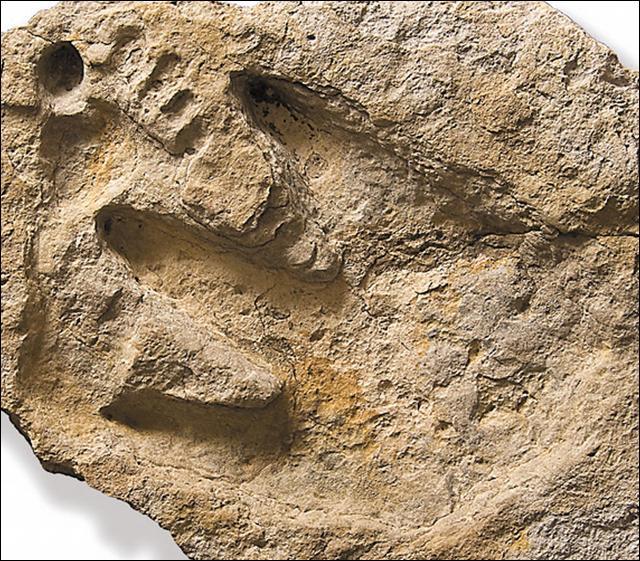 Glen Rose Footprint