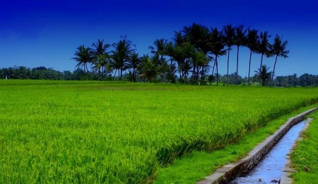 Tanah Sawah yang Subur di Indonesia