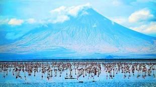 Danau Natron Bisa Merubah Binatang-binatang Menjadi Batu