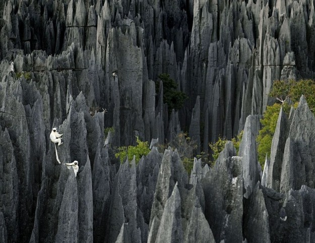 Tsingy de Bemaraha, Hutan Batu